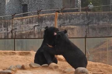 cute-puppy-bears-640
