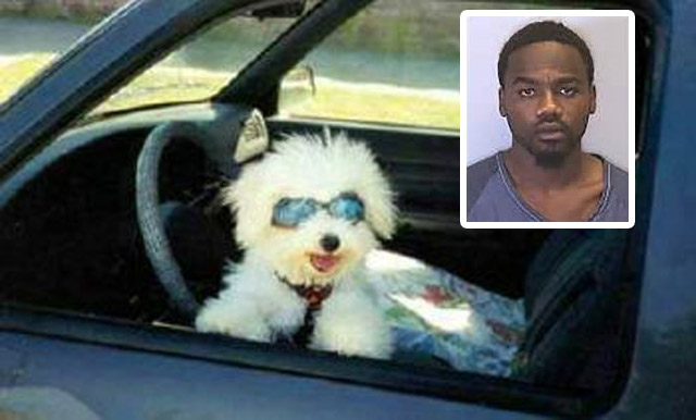 dog-driving-florida-man