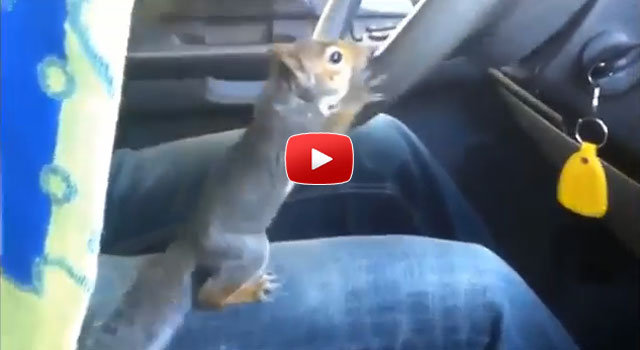 squirrel-driving